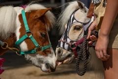 Ponys-1-of-1